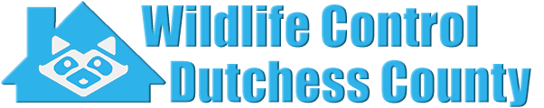 Dutchess County Wildlife and Animal Removal
